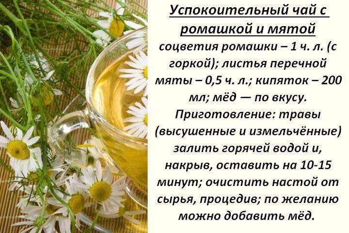 Ромашковый чай польза и вред лечебные свойства, применение
