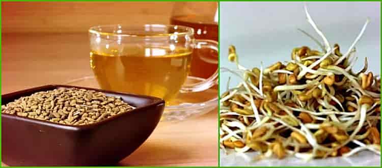 Египетский желтый чай из хельбы. полезные свойства и противопоказания.