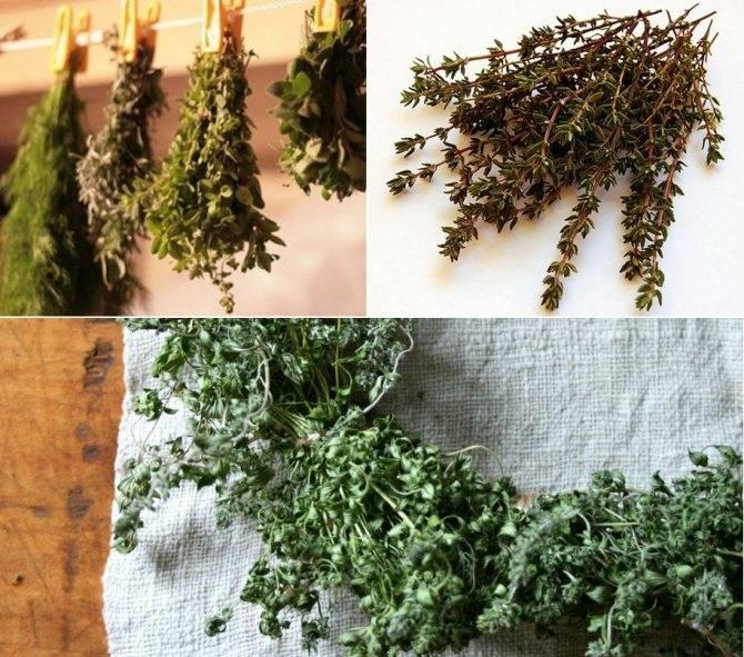 Все о травах и специях – сушка и использование  :: инфониак