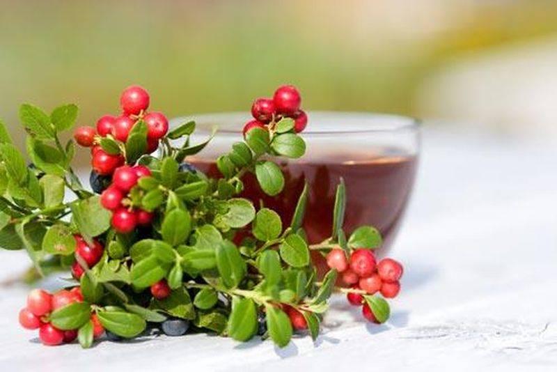 Брусничный чай – его рецепты и полезные свойства