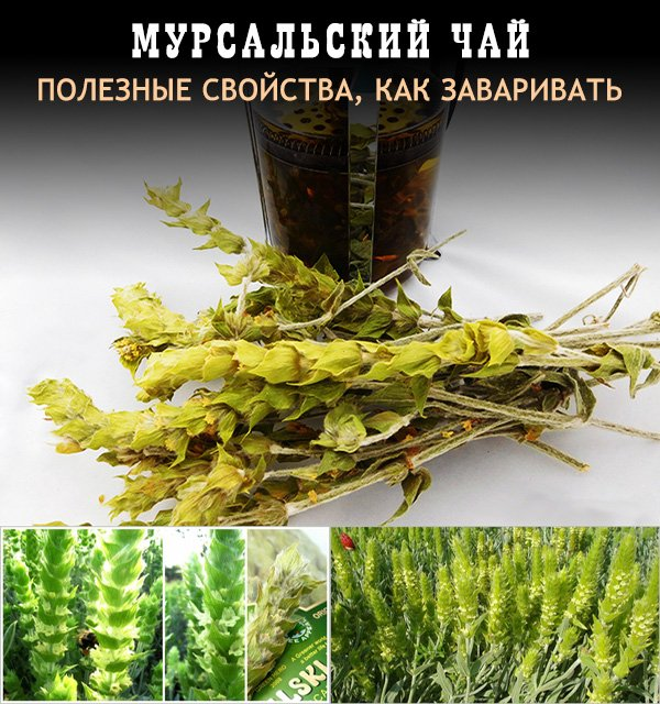 Желтый чай: польза и вред уникального китайского напитка