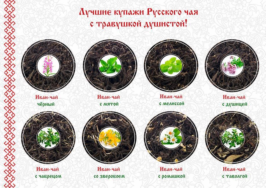 Полезные травы для чая: как правильно собрать и заготовить
