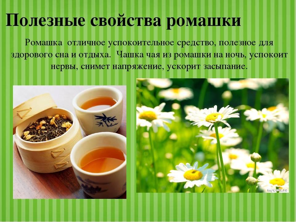 Травяные чаи, которые полезно пить кадый жень