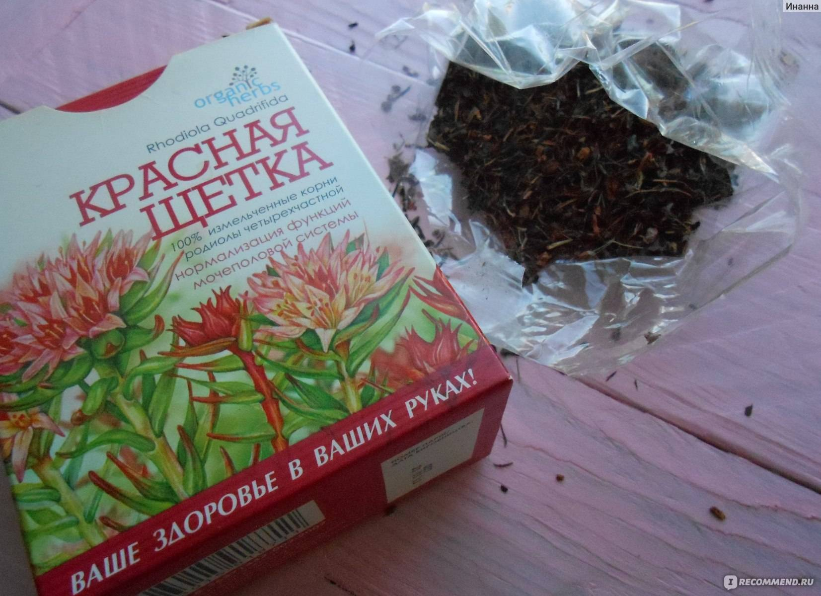 Трава красная щетка — лечебные свойства и противопоказания для женщин, инструкция по применению, отзывы