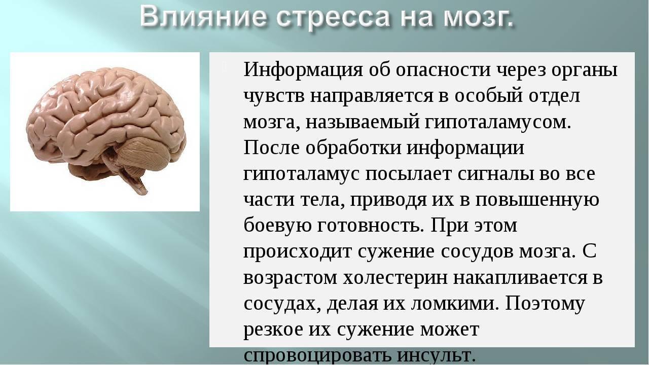 Как музыка влияет на человеческий мозг