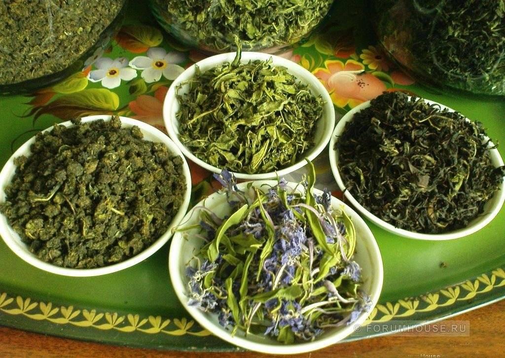 Жасминовый чай: эффект, применение и особенности ароматного чая