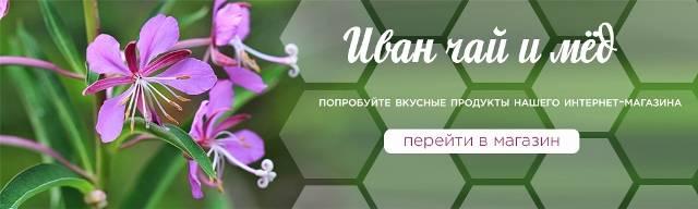 Иван-чай при диабете - польза травяного сбора, противопоказания и советы