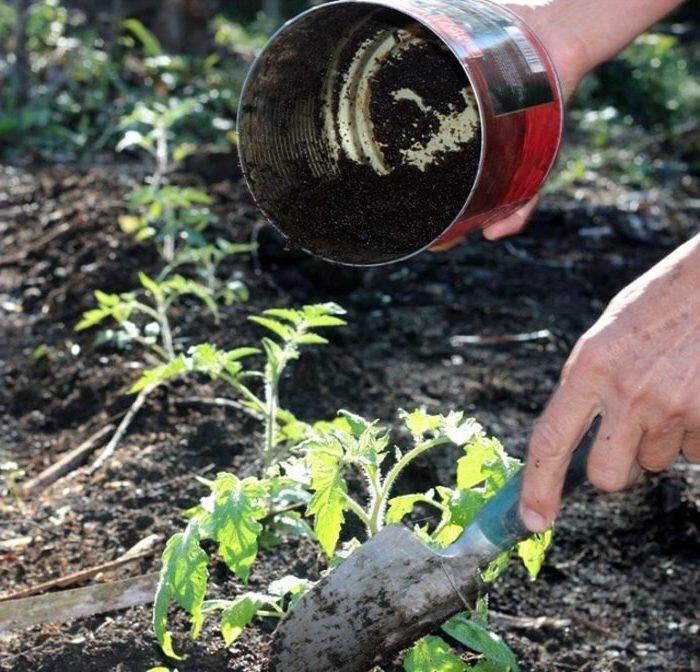Кофейная гуща, как её использовать в огороде?