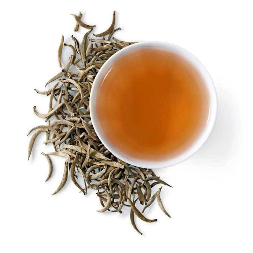 Польза и вред белого чая. особенности заваривания