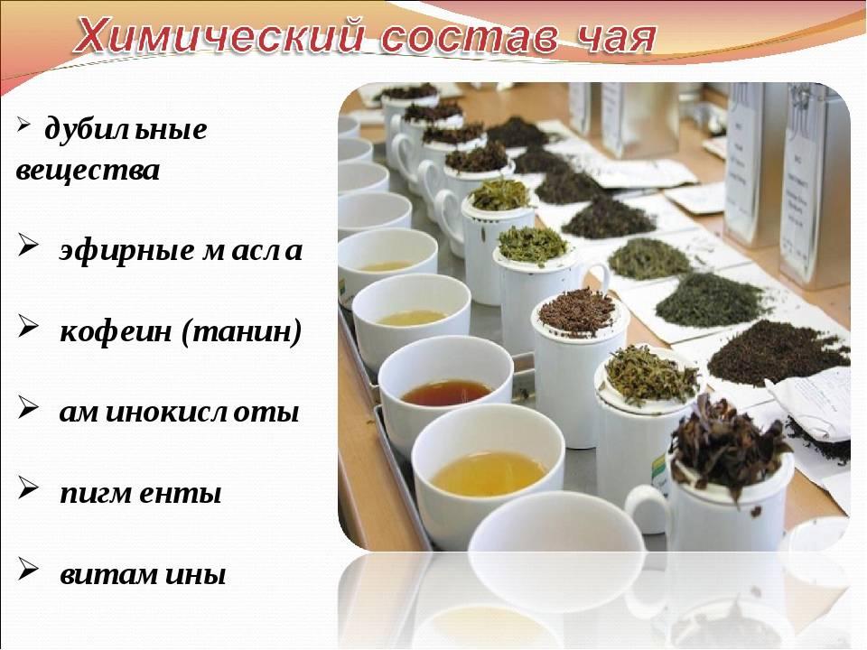 Черный чай: состав, особенности, польза и вред