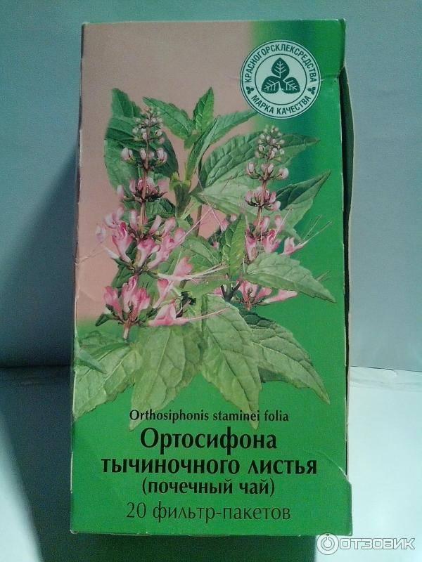Мочегонные травы и сборы - список эффективных для лечения почек и похудения, от давления и отеков