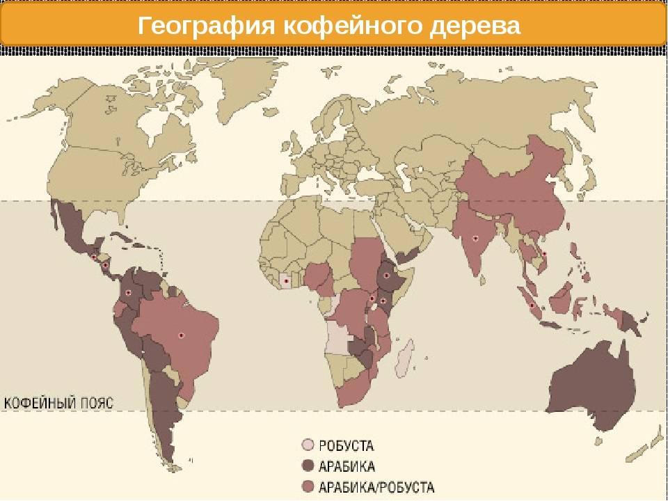 Как и где растет кофе: страны и условия произрастания