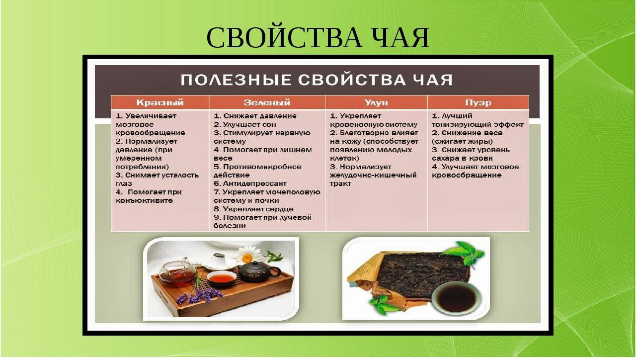 Какой бывает чай, виды чая, сортность и классификация