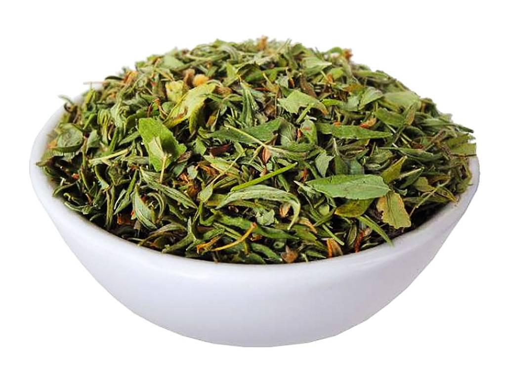 Курильский чай лечебные свойства и противопоказания.