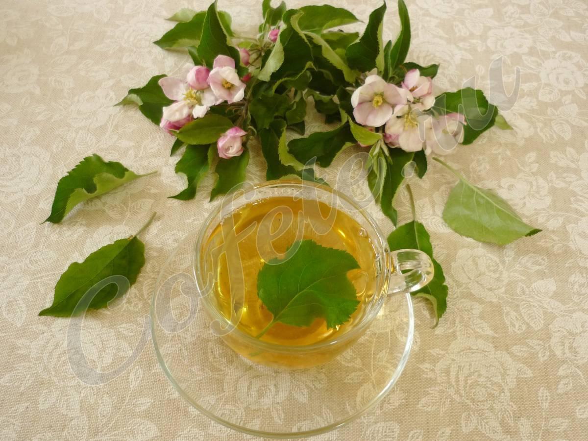 Чай из листьев груши польза и вред - польза или вред