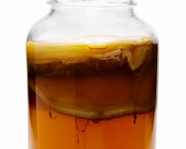 Грибной чай (kombucha): польза и вред, как вырастить медузомицет