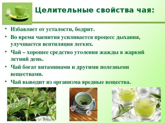 Зеленый чай. польза, состав, свойства, противопоказания и вред зеленого чая. маски с зеленым чаем. как выбрать зеленый чай