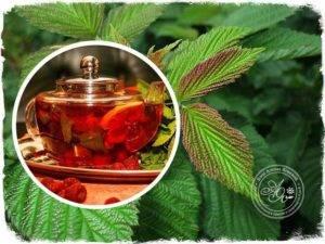 Влияние чая из листьев малины на организм, его польза и вред