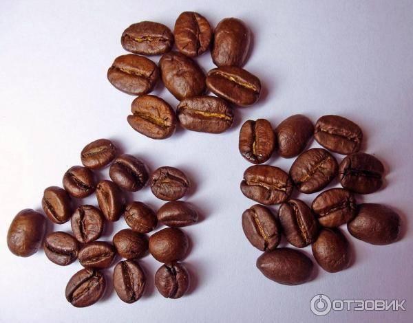 Полный обзор сорта кофе Робуста
