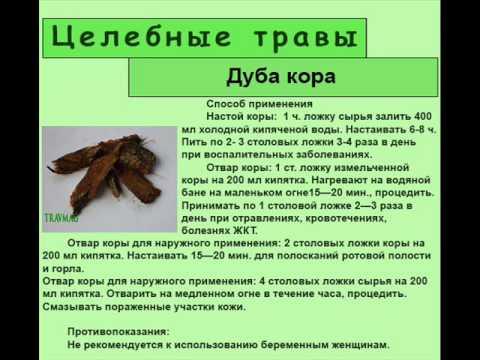 Кора дуба — лечебные свойства и противопоказания | здоровье | селдон новости