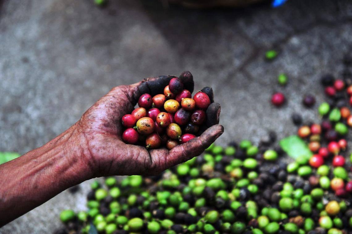 Чем отличается кофе из разных стран мира, и почему он разный?