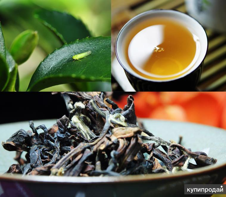 Габа-чай: свойства, польза для организма, разновидности