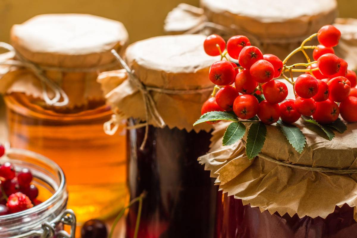 Рябина красная полезные свойства и рецепты на зиму