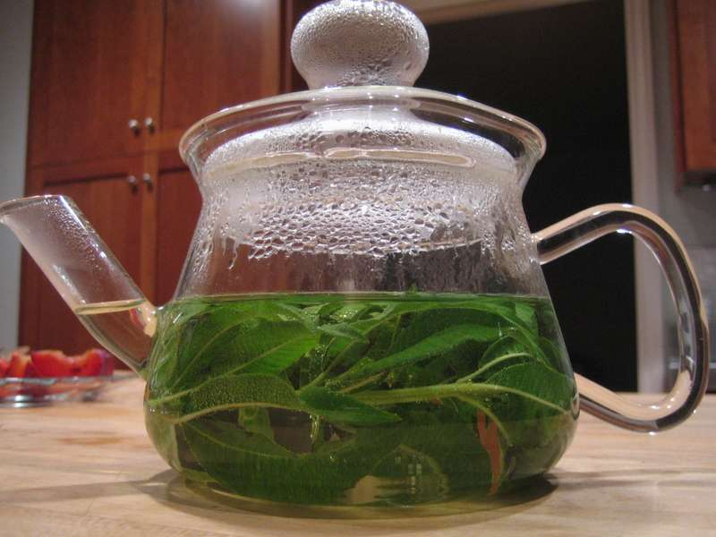 Вербена чай: применение в народной медицине, лучшие рецепты