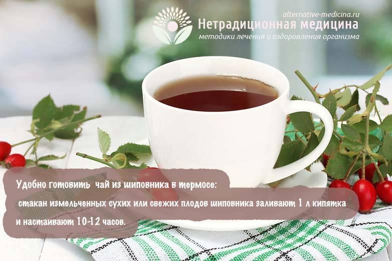 Шиповник: лечебные свойства и противопоказания, рецепты для мужчин и женщин