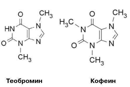 Теобромин: что это такое, где содержится, применение, влияние на организм, отравление