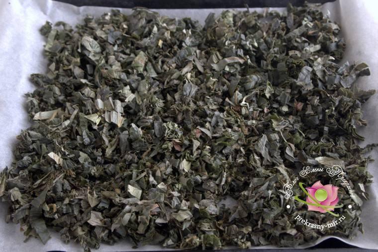 Как сушить землянику: ягоды и листья для чая, технология и хранение