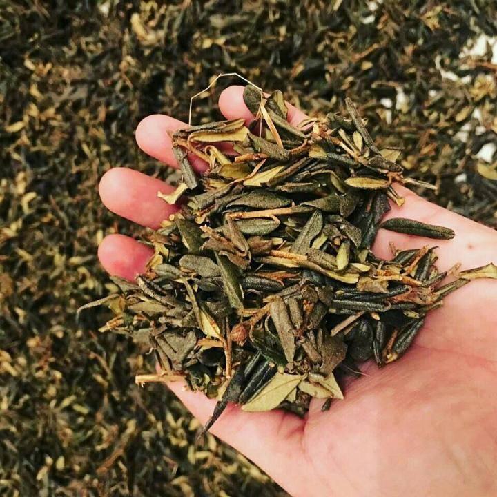 Чай саган-дайля: полезные свойства, противопоказания