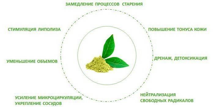 Зеленый чай: польза и вред для мужчин