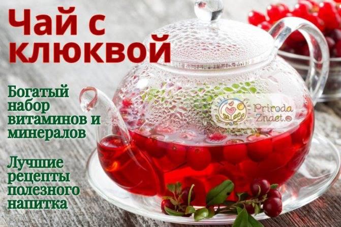6 рецептов вкуснейшего чая с клюквой