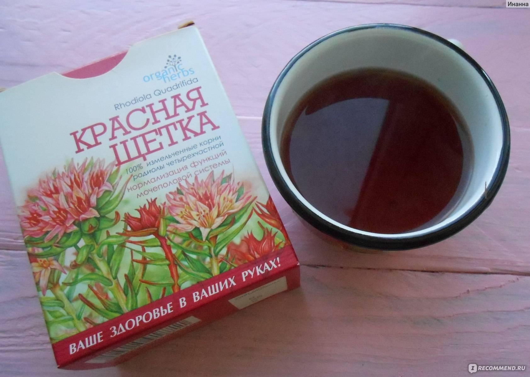 Красная щетка— полезные свойства, применение вгинекологии, рецепты народных средств