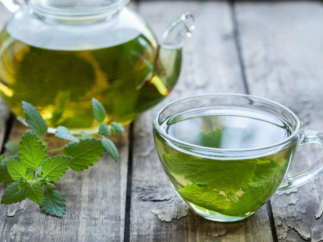 Мята во время беременности, польза и вред, противопоказания, можно ли беременным пить мятный чай и использовать эфирное масло этой травы
