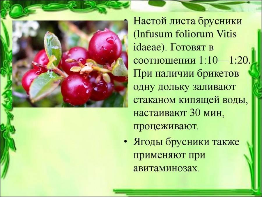 Брусничный лист – лечебные свойства и противопоказания. от чего помогают листья брусники? как заваривать брусничный лист от отеков при беременности?