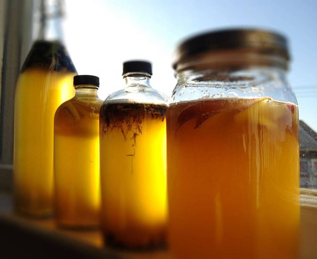 Чайный гриб: бжу, энергетическая ценность, польза и вред медузомицета