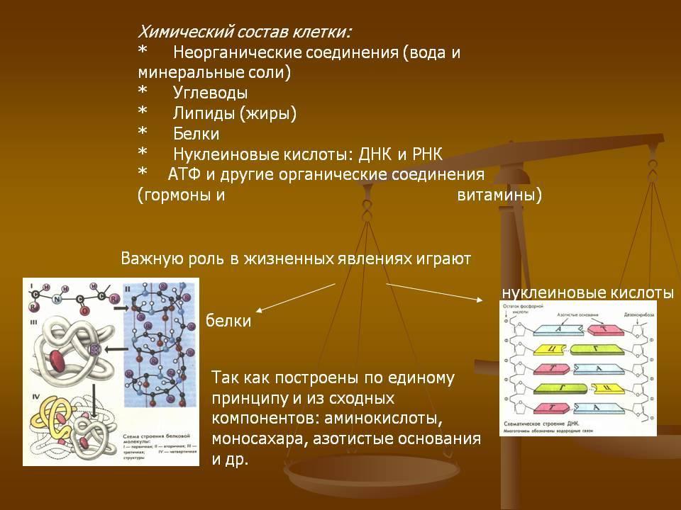 Химический состав кофейного зерна