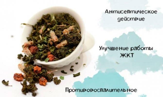 Желчегонные травы при застое желчи, холецистите, дискинезии - cписок лучших трав и препаратов