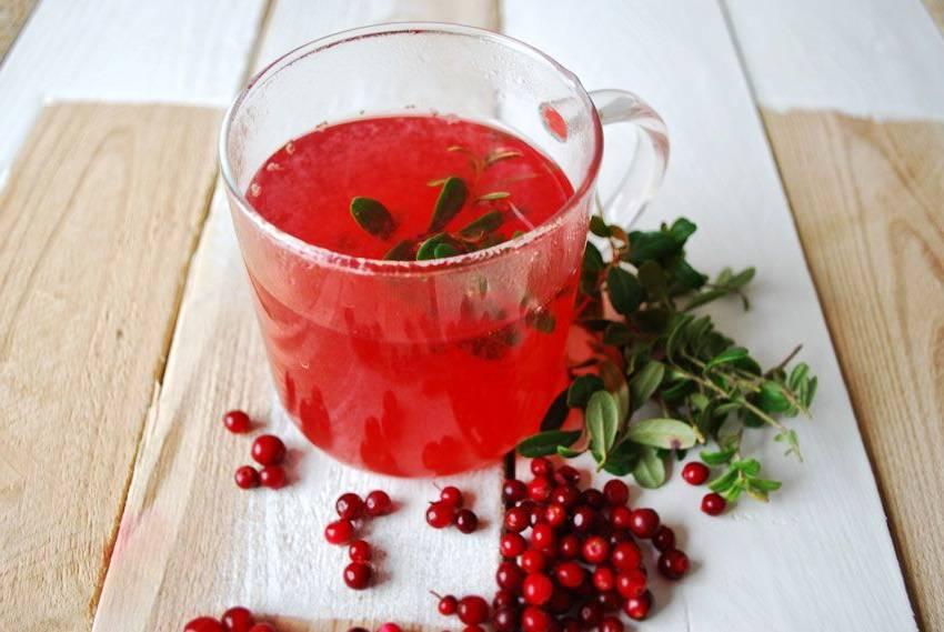 Брусничный чай полезные свойства