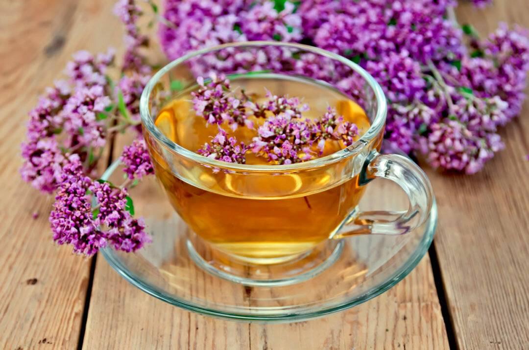 Польза и вред душицы, как правильно заваривать чай с душицей