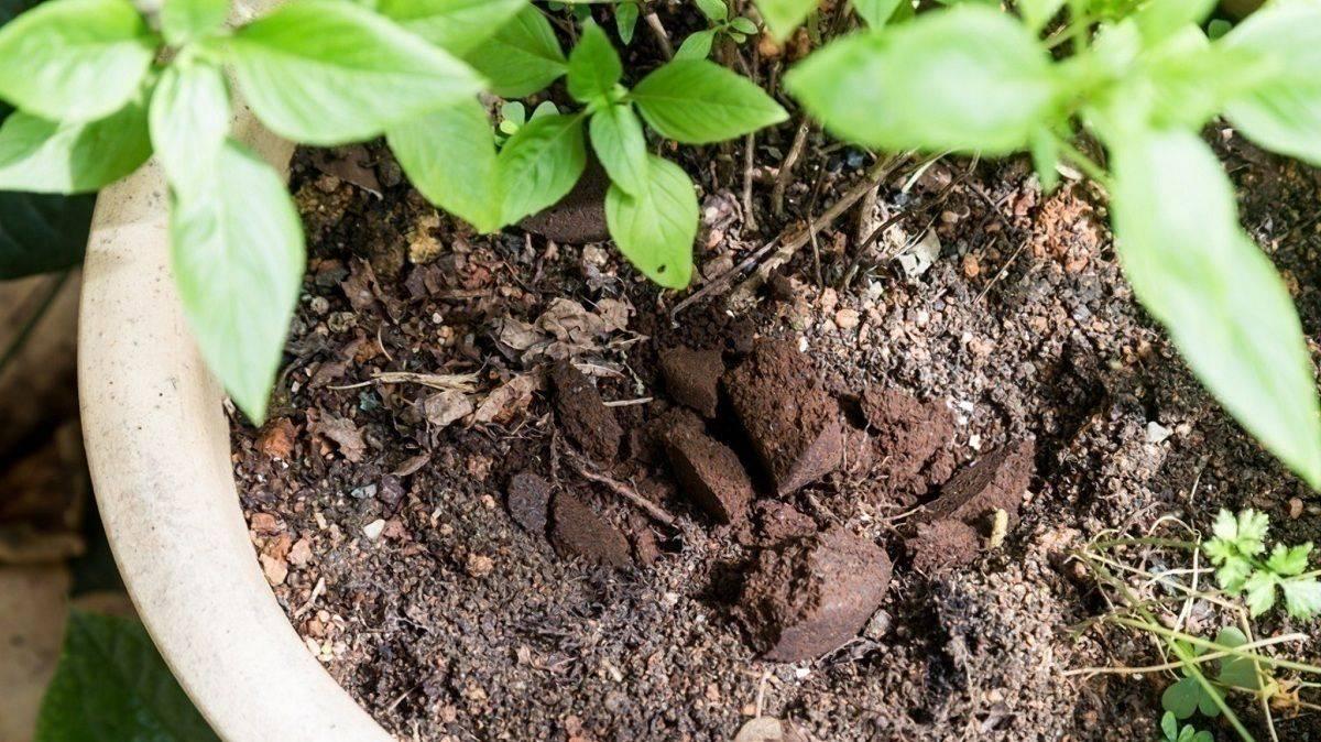 Кофейная гуща как удобрение, как использовать в саду и огороде