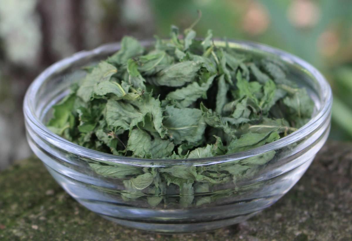 Чай из крапивы: рецепты, показания, противопоказания
