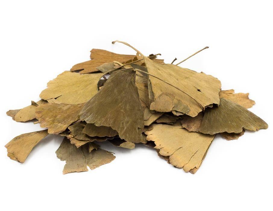 Чай гинкго билоба: польза и вред, как заваривать чай из листьев