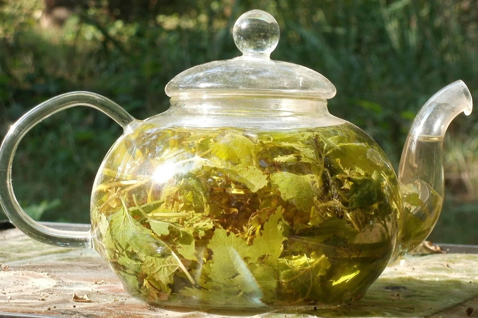 Липовый чай: полезные свойства и как заваривать