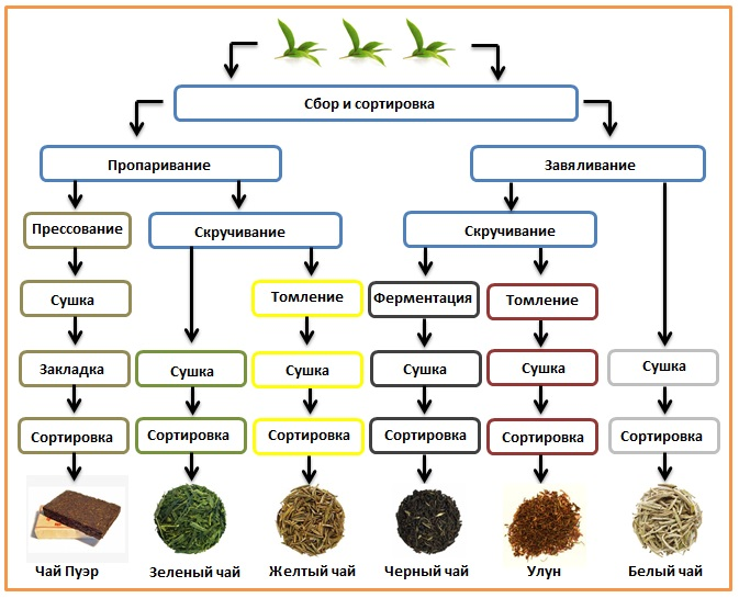 Чайный бизнес, изготовление эксклюзивного чая своими руками. натуральный напиток