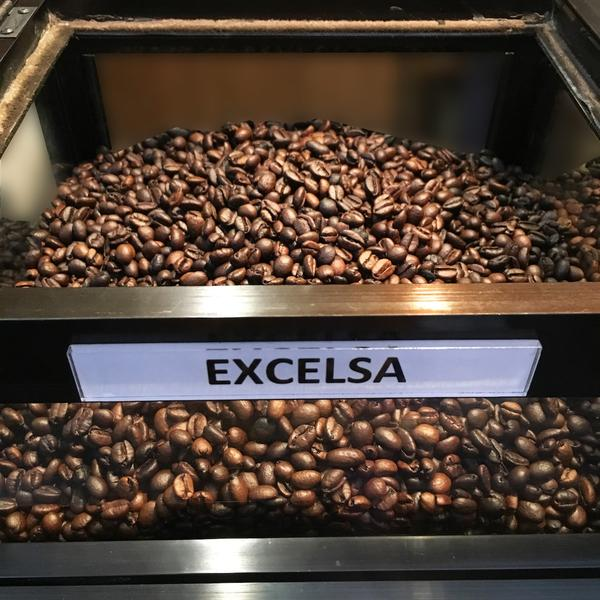 Кофе эксцельза: понятие и характеристика сорта зерен