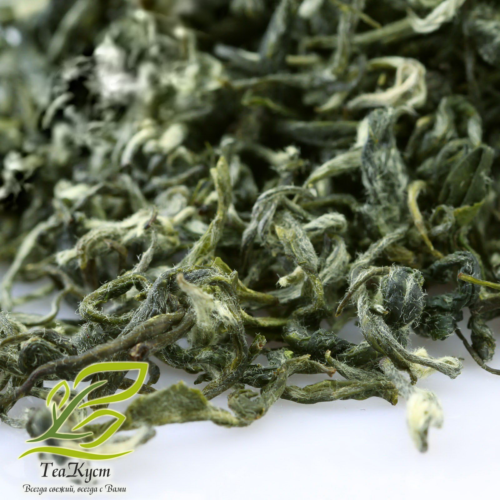 Сорта чая. зеленый чай. провинции ганьсу, шаньдун, хэнань, цзянсу. - teaterra | teaterra