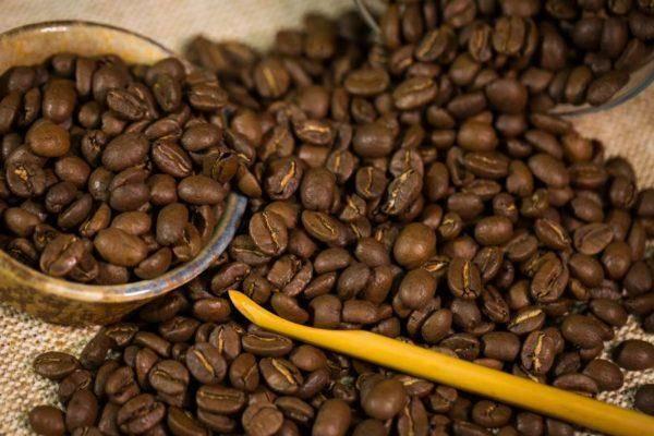 Кофе марагоджип - история создания, характеристики, сорта и отзывы